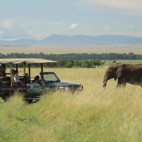 A photograph of a safari truck in grasslands with an elephant in the background.